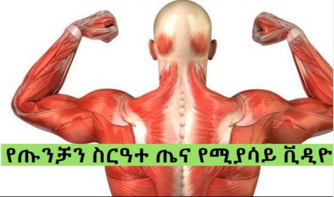 The Muscular System - Part 1