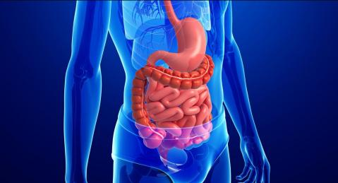 Human Digestive System - Part 1